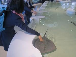 鮫やエイとの触れ合いコーナー